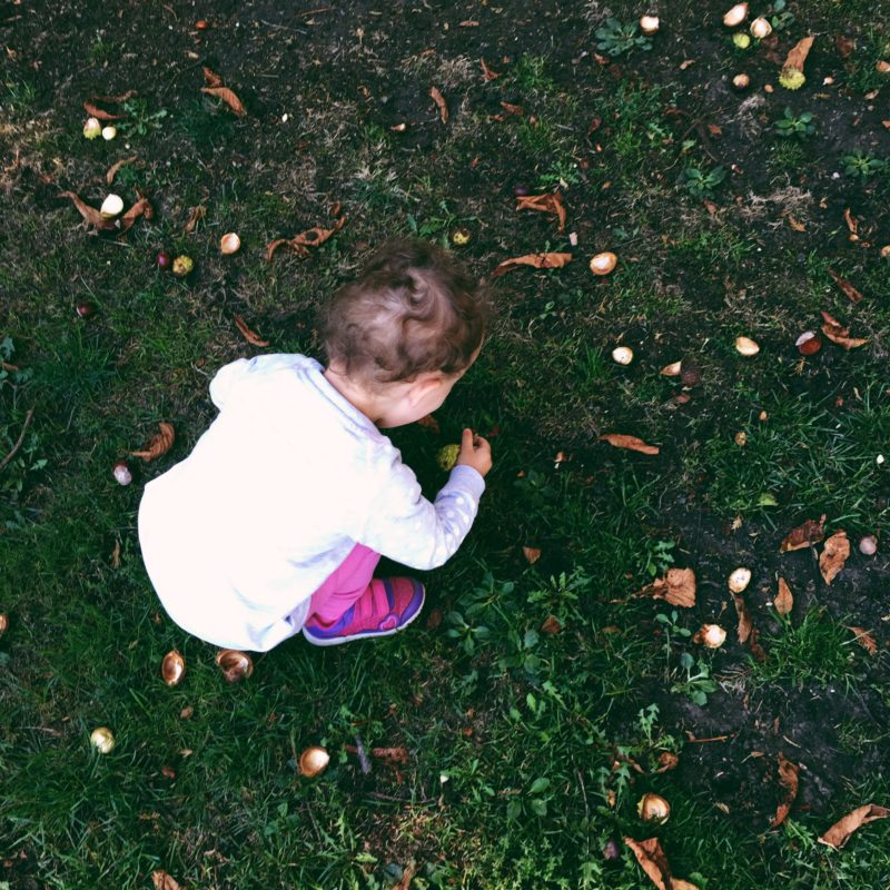 toddler girl collecting conkers in autumn