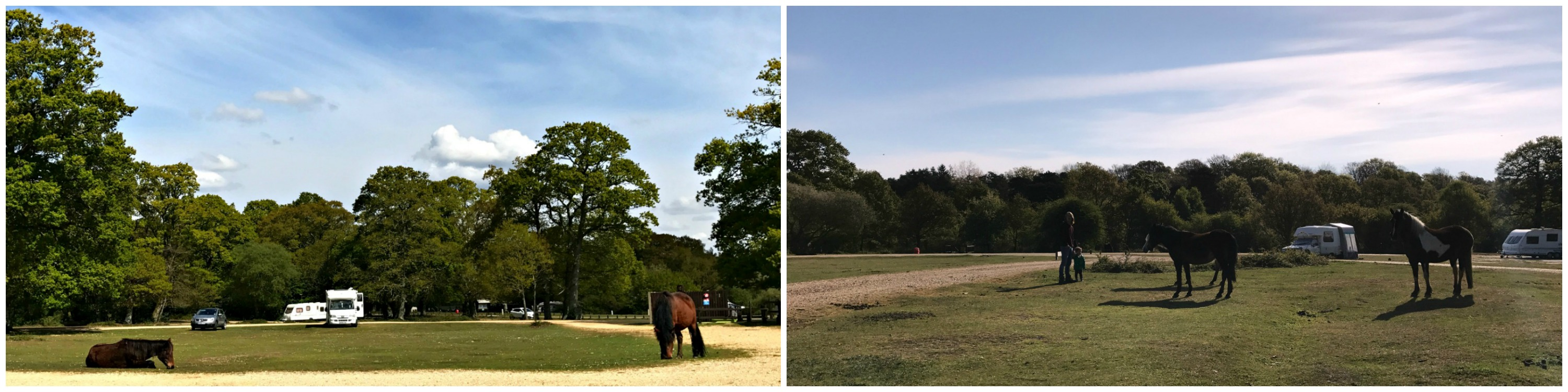 new forest camping horses